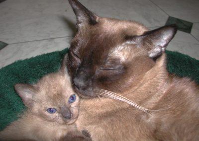 Star and kitten