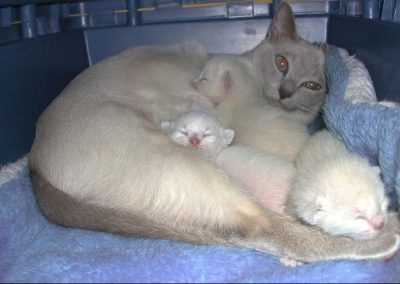 Sugar loving her three babies